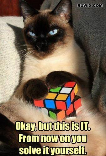 Rubiks cube cat memes funny images